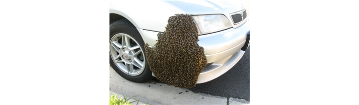 bee-swarm_zoom_1505151456401